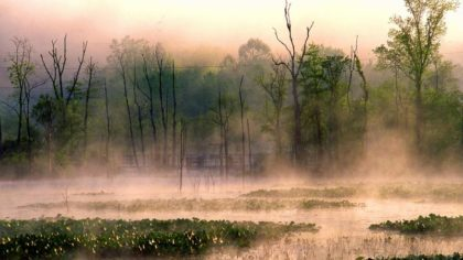 Beaver Marsh, courtesy of CVNP